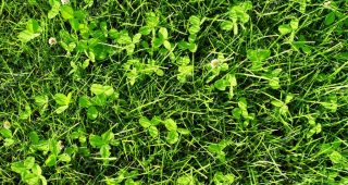 depositphotos_22245121-stock-photo-green-grass-meadow-background-turf